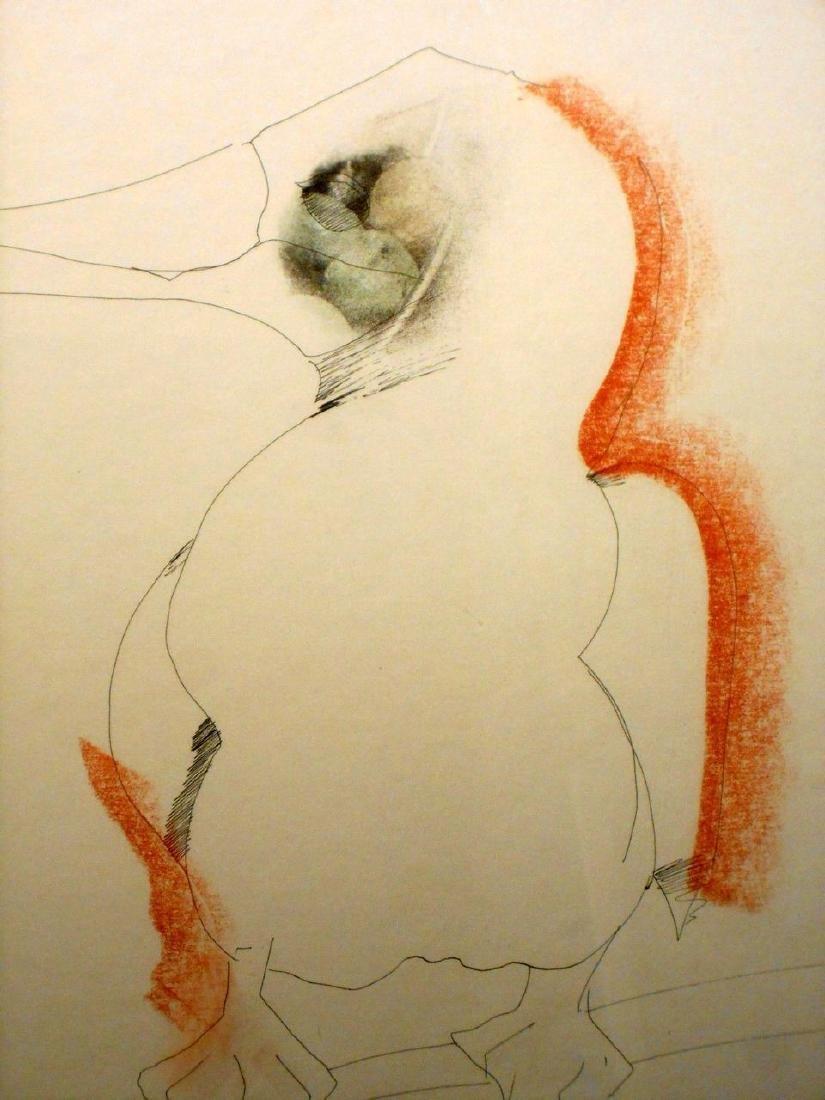 1970 Pelican Drawing By Sergei Davydov - 2