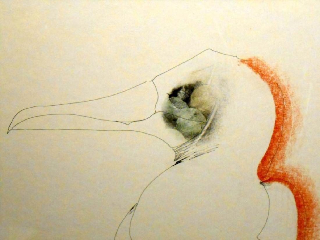 1970 Pelican Drawing By Sergei Davydov - 3