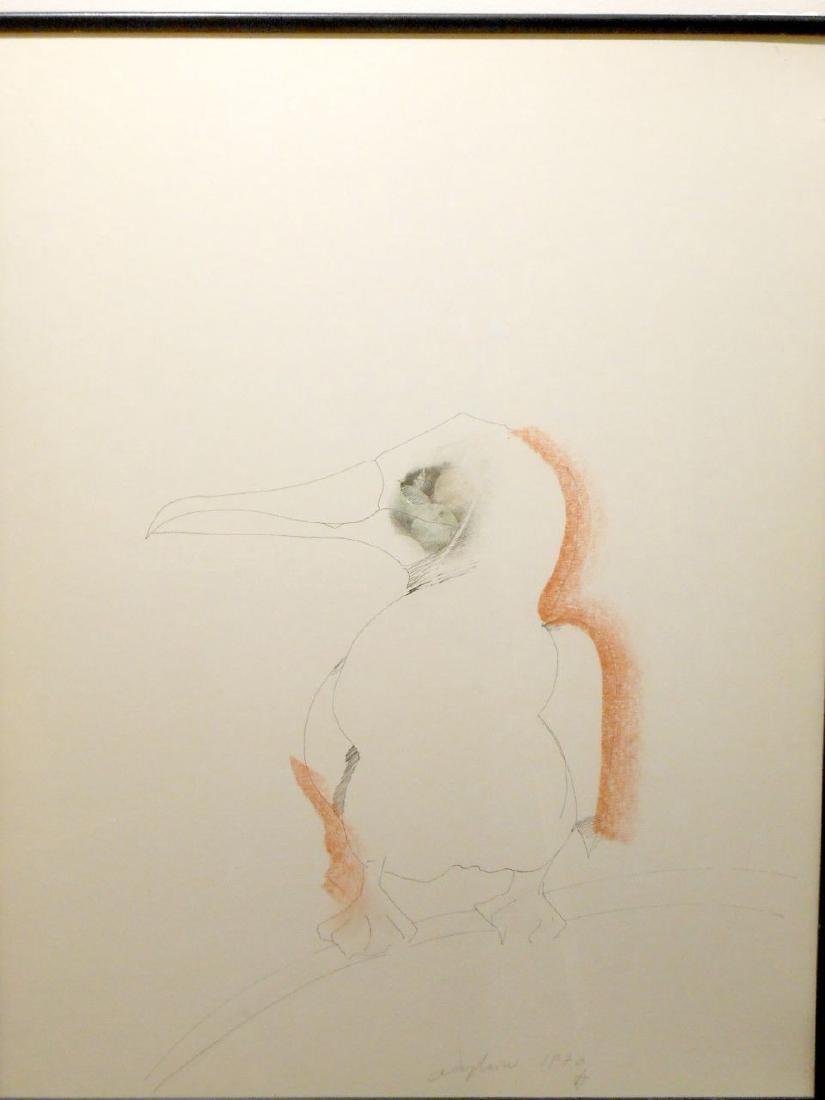 1970 Pelican Drawing By Sergei Davydov - 7