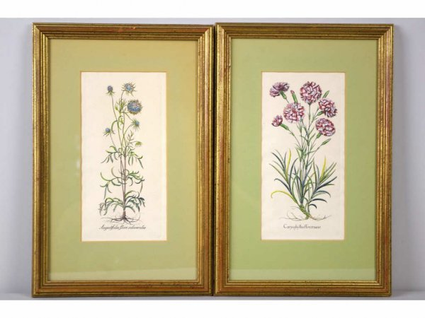 22: PAIR OF HAND-COLORED FLORAL PRINTS, 9x5in.