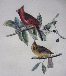 2: AUDUBON BIRD OF AMERICA OCTAVO LITHOGRAPH