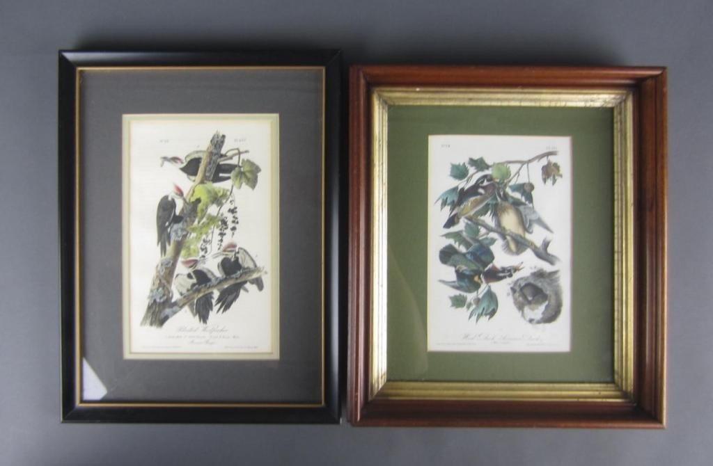 5: TWO AUDUBON BIRDS OF AMERICA OCTAVO LITHOGRAPHS