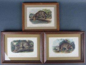 7: THREE AUDUBON QUADRUPED OCTAVO LITHOGRAPHS, CATS