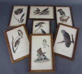 11: SEVEN AUDUBON BIRDS OF PREY OCTAVO LITHOGRAPHS