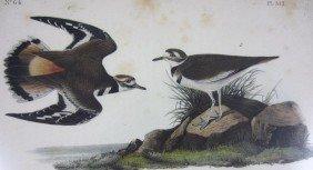 12: TEN AUDUBON BIRDS OF AMERICA OCTAVO LITHOGRAPHS