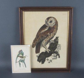 TWO BIRD LITHOGRAPHS