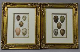 PAIR BOOKPLATE LITHOGRAPHS OF GULL EGG SPECIMANS