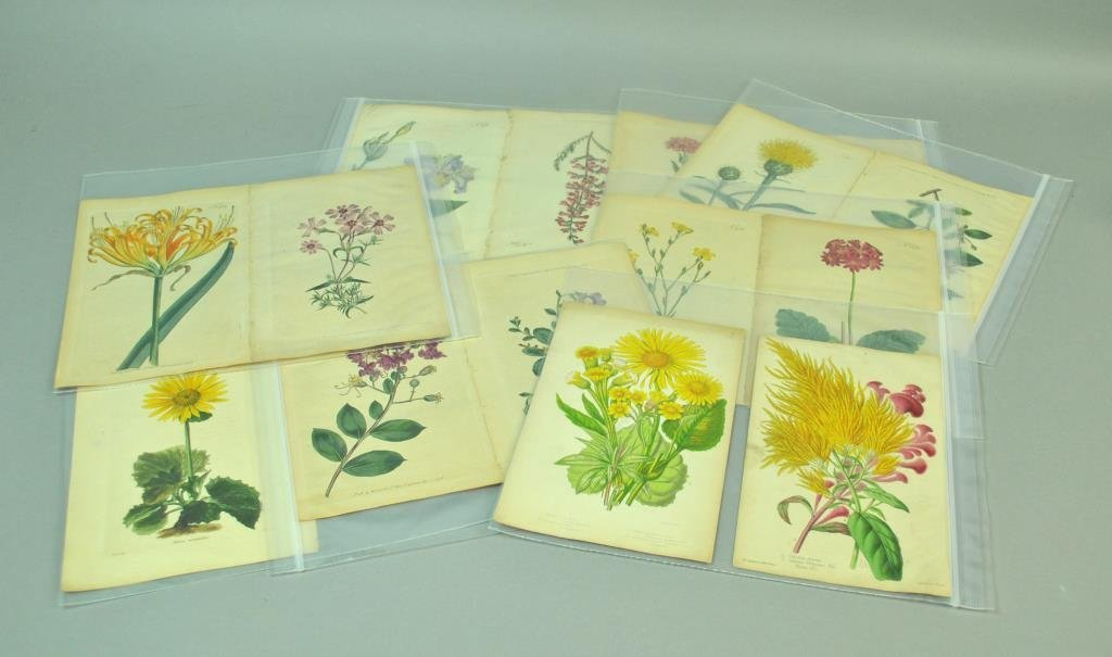 (24) BOTANICAL PLATES, MOST BY WILLIAM CURTIS