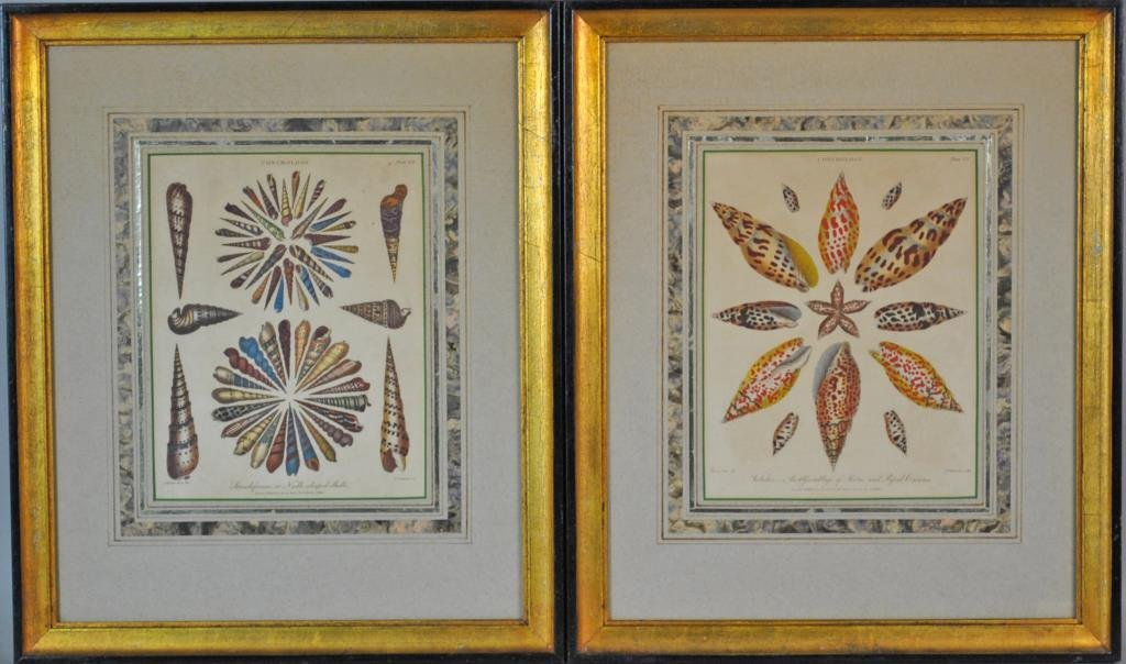 (2) CONCHOLOGY HAND COLORED ENGRAVINGS
