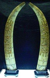 "7: Pair 40"" Antique Cow Bone Dragon Tusks"