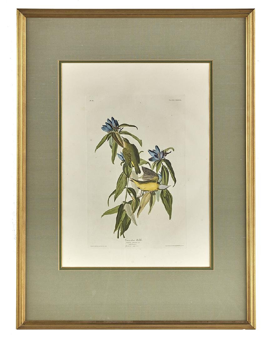 After John James Audubon, (American, 1785-1851),