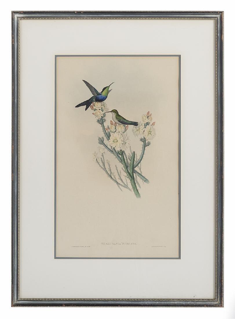 Gould & Richter Ornithological Lithographs - 2