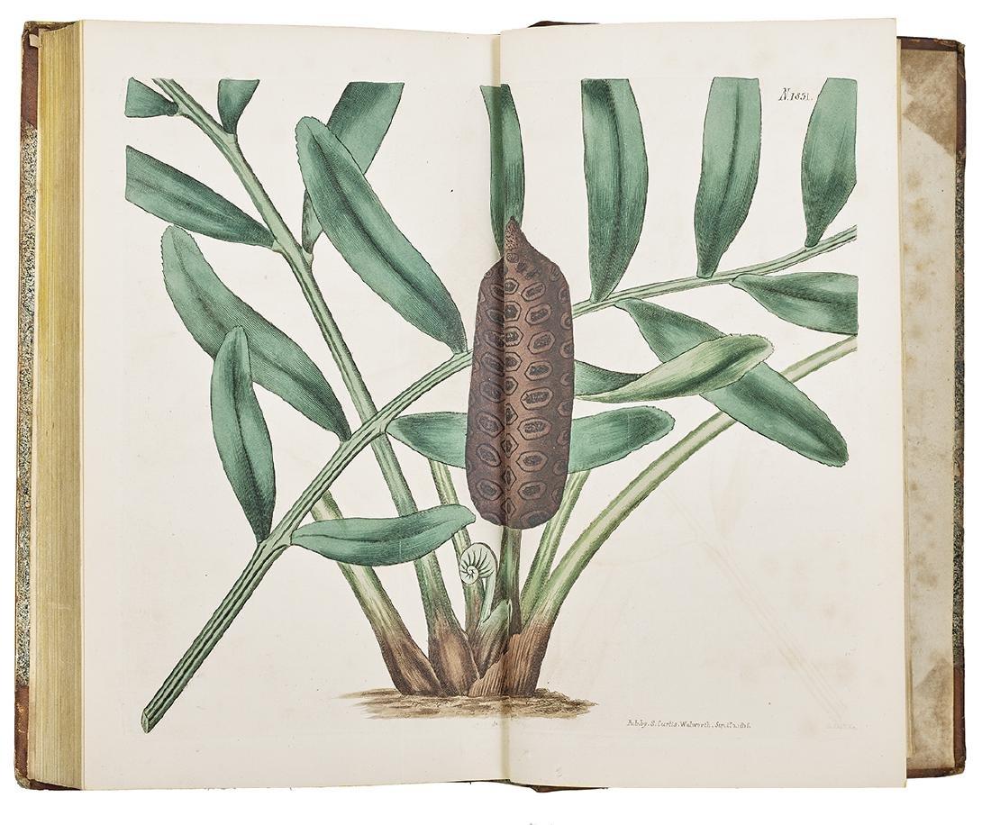 """William Curtis, """"Botanical Magazine"""" 1787-1815 - 4"""