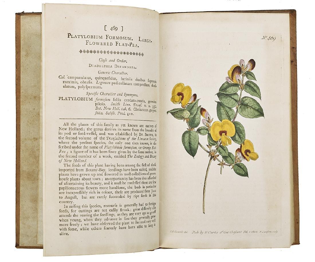 """William Curtis, """"Botanical Magazine"""" 1787-1815 - 5"""