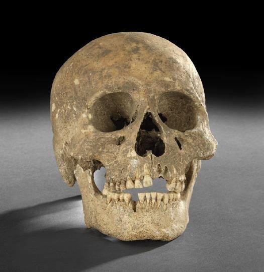 88: Human Skull