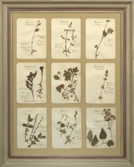 18: Four French Mounted Dried Botanical Specimens