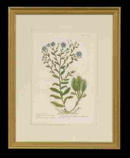 Group of Four Hand-Colored Botanical Engravings
