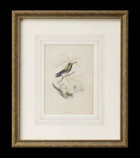 Pair Of Sir William Jardine Hummingbird Prints