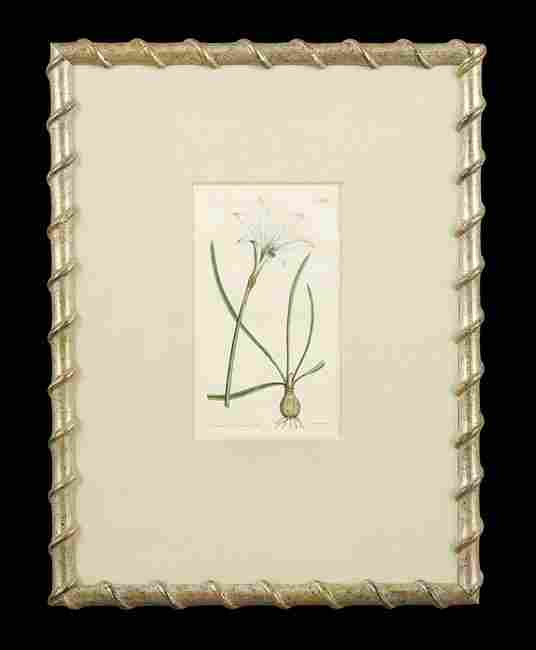 Four British Hand-Colored Botanical Engravings