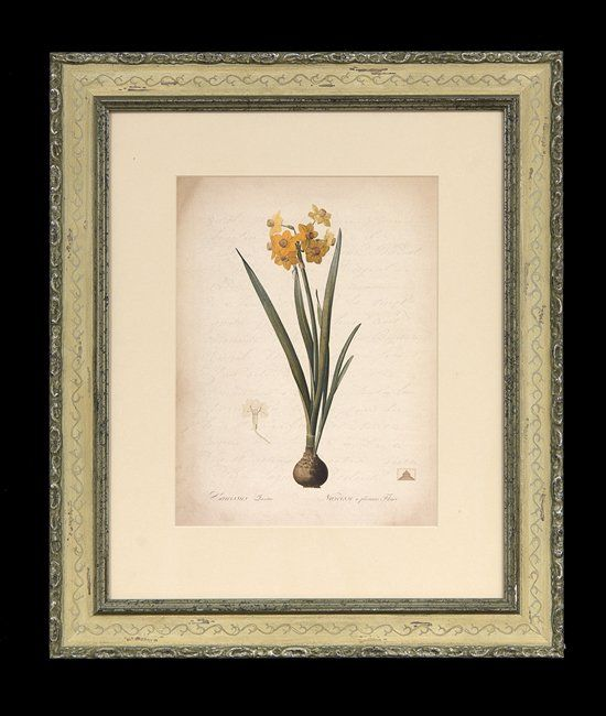 Collection of Four Decorative Botanical Prints