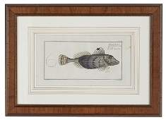 Six Hand-Colored Engravings of Fish