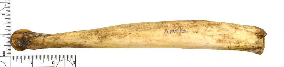 """Inuit 11.5"""" Bone Beamer"""