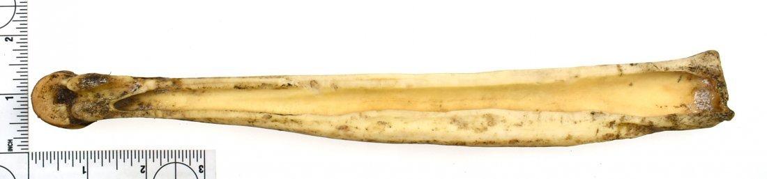 """Inuit 11.5"""" Bone Beamer - 2"""