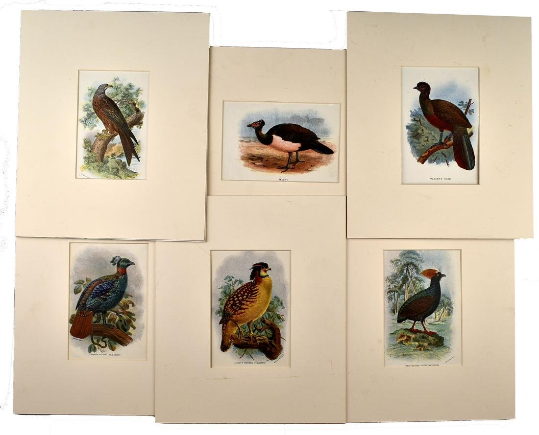 6 1890's Chromolithographs of Birds