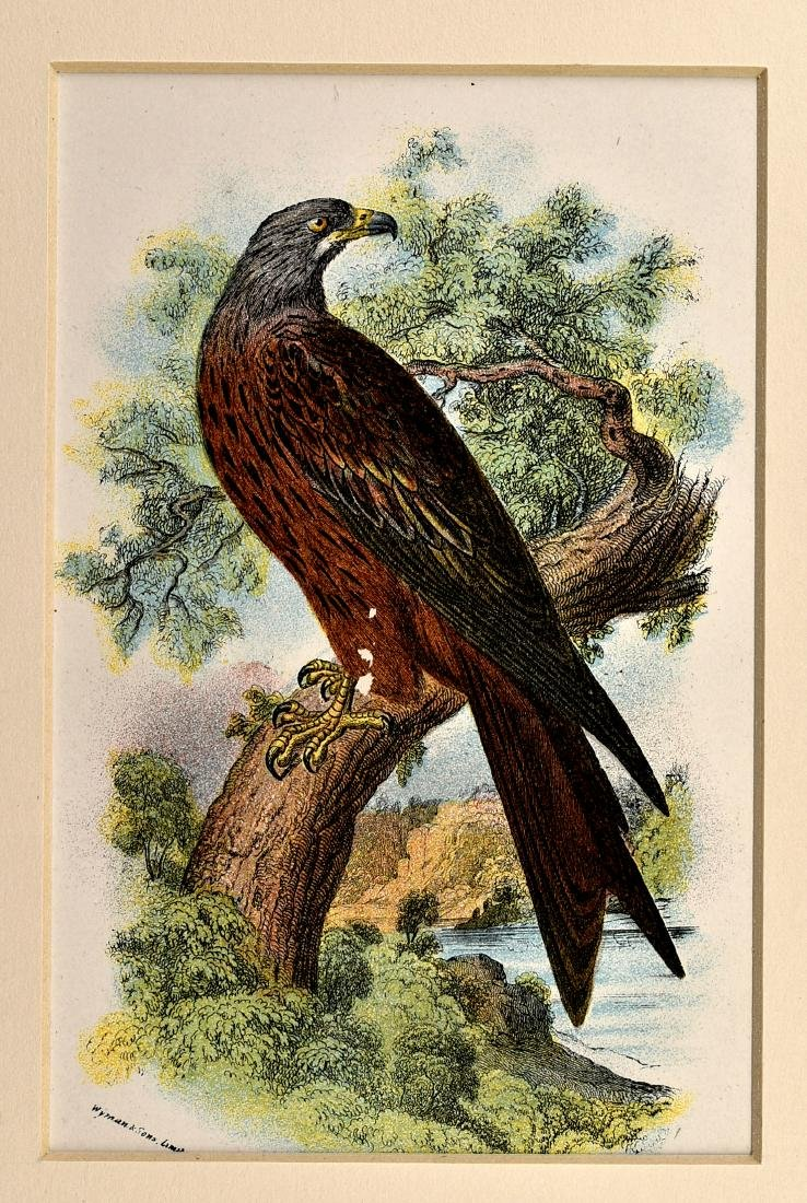 6 1890's Chromolithographs of Birds - 2