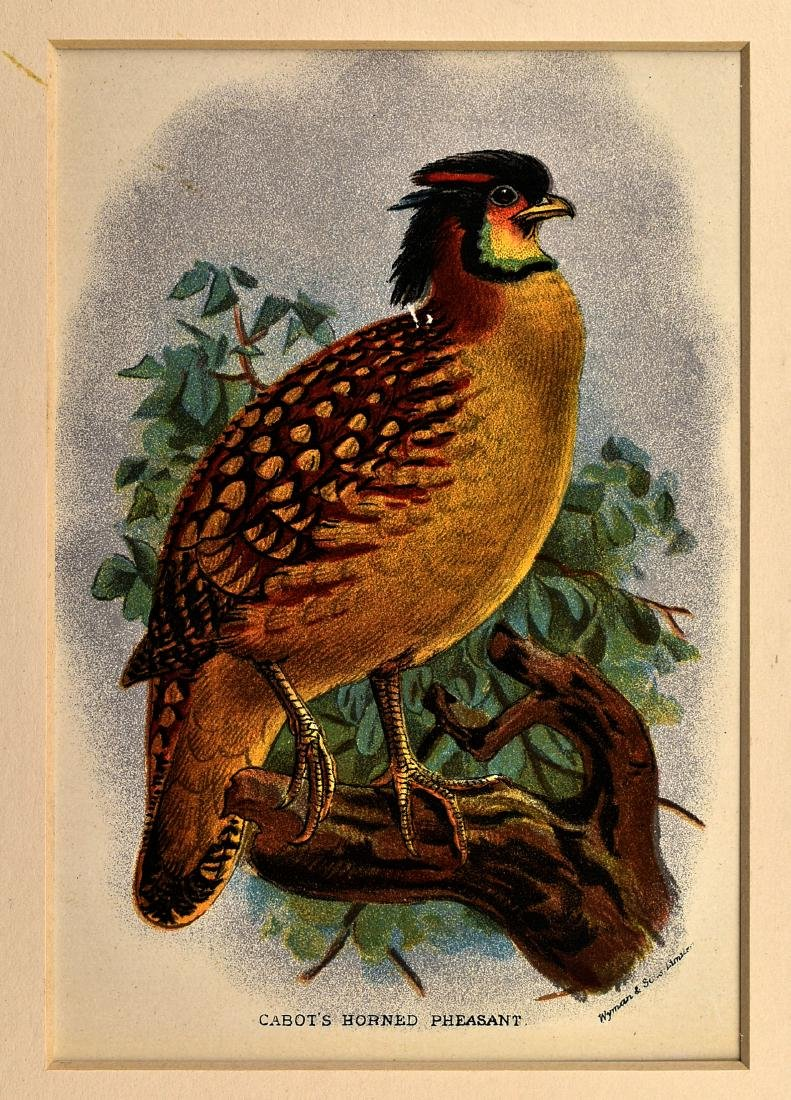6 1890's Chromolithographs of Birds - 3