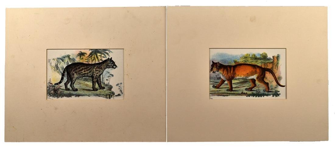 Pair of 1890's Big Cat Chromolithograph