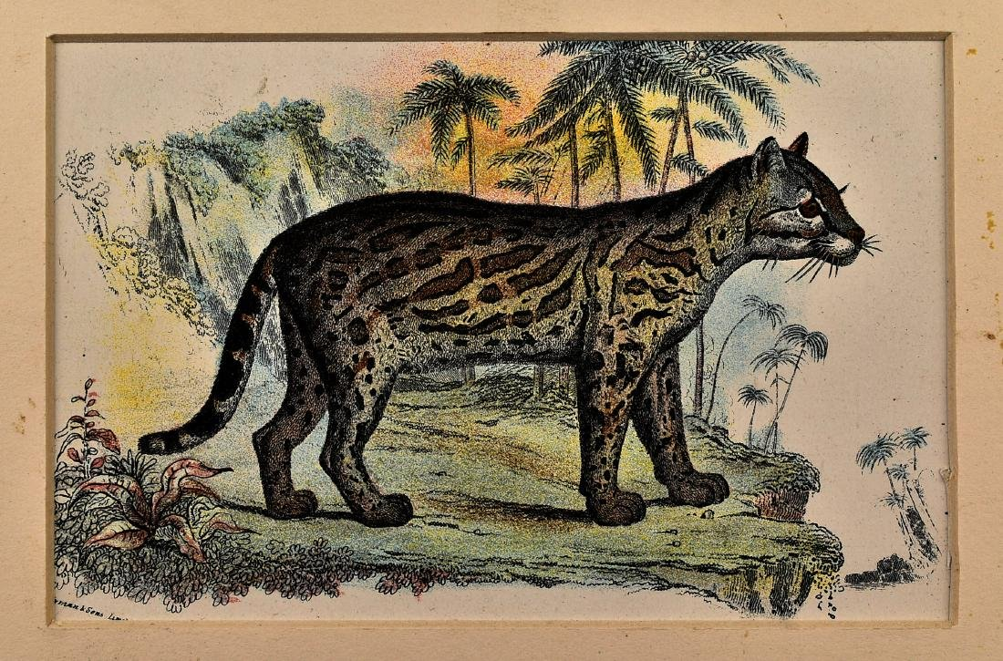 Pair of 1890's Big Cat Chromolithograph - 2