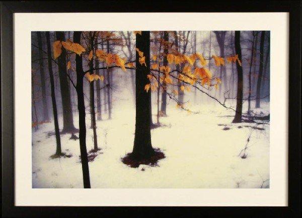 Autumn Winter Forest Landscape Photograph Art Print