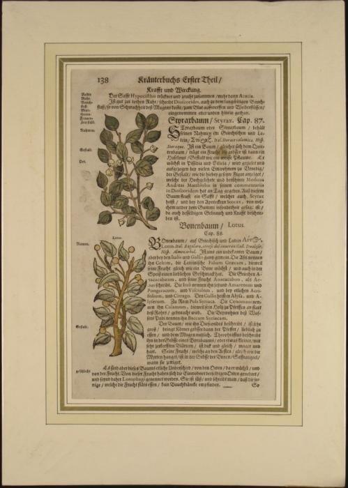 17th C. German Herbalist Apothecarys Book Woodcut Print