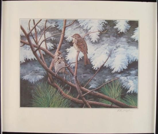 Peter Miehm Signed Finches Wildlife Bird Art Print