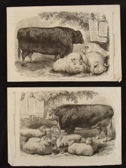 2 Antique Animal Prints Illustrated London News 1867