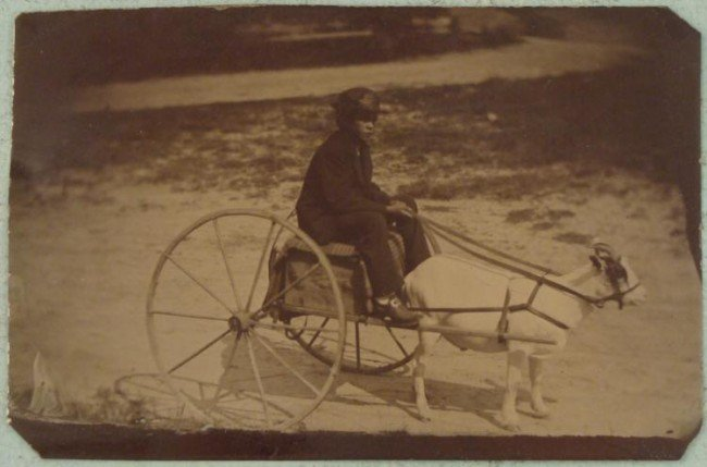 Antique Tintype Boy on Cart w/ Goat Outdoor Photo
