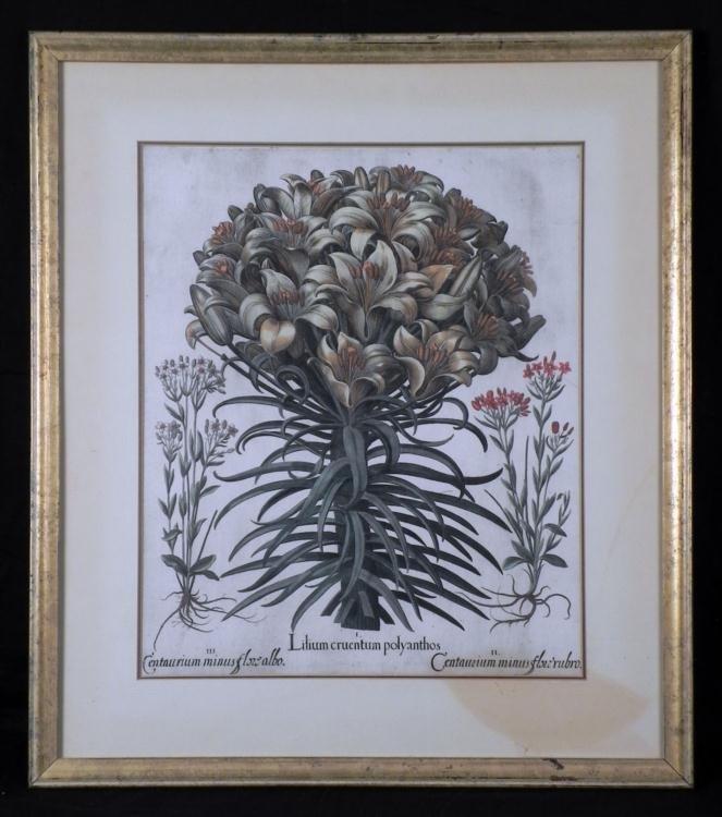 Basilius Besler Botanical Print Lilium Cruentum