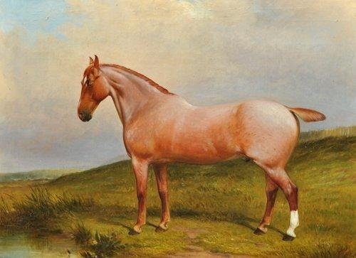 ET0523120052 J.W. COLE Roan Gelding horse portrait in a