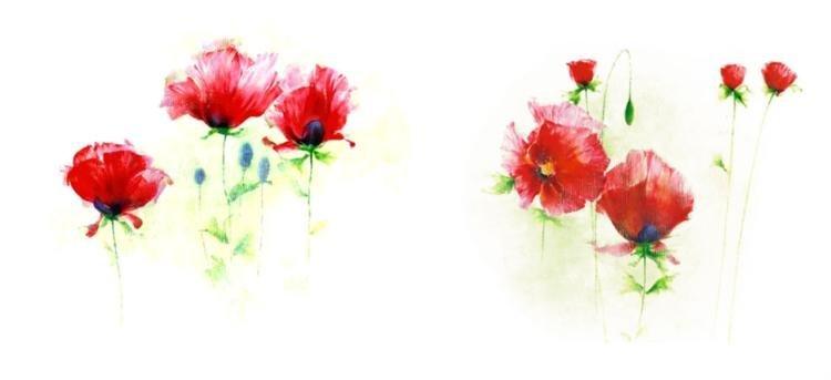 Andrea Fontana Red Poppies I and II Art Prints