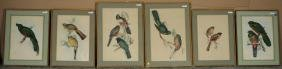 Group Six Hand Colored Ornithological Engravings