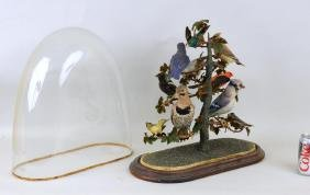 Victorian Taxidermied Bird Group