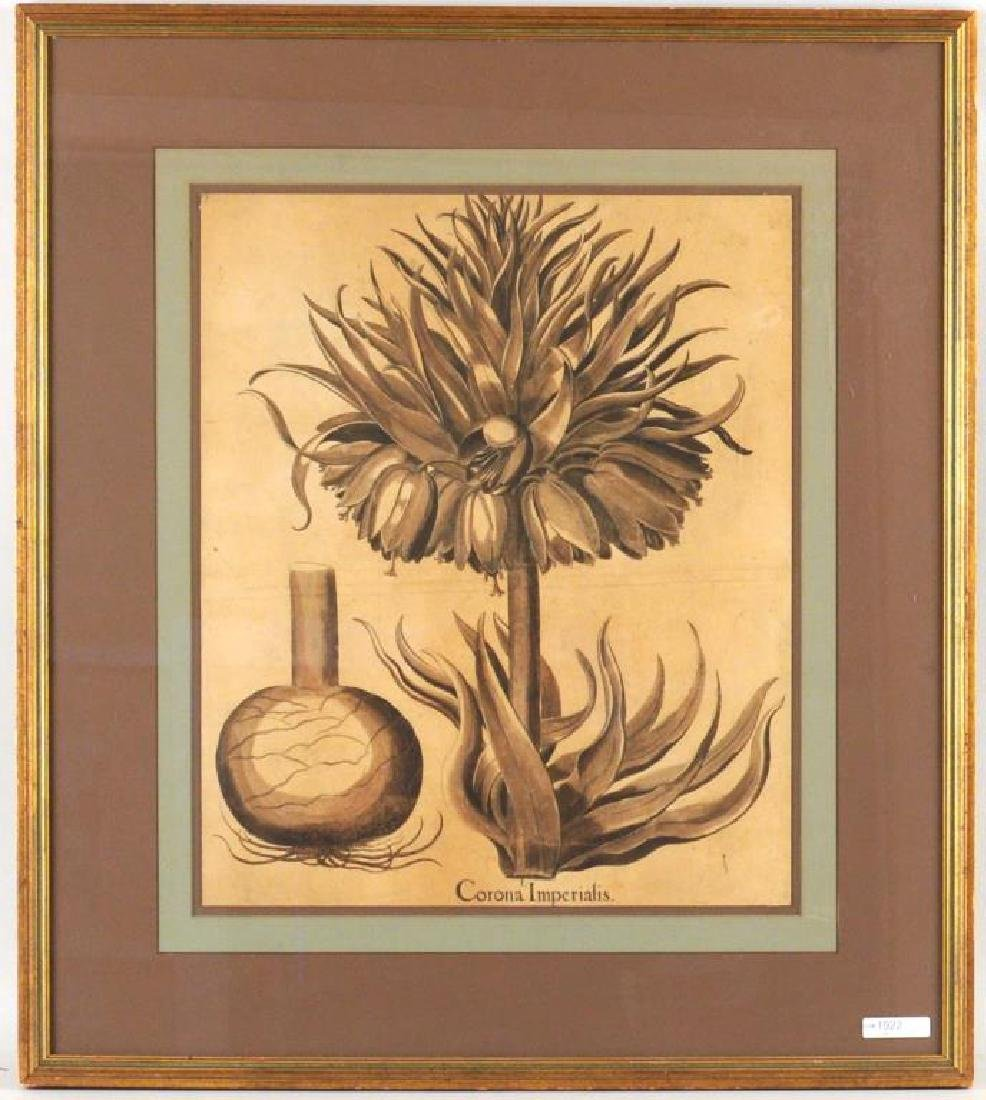 "Framed Botanical Engraving, ""Corona Imperialus"""