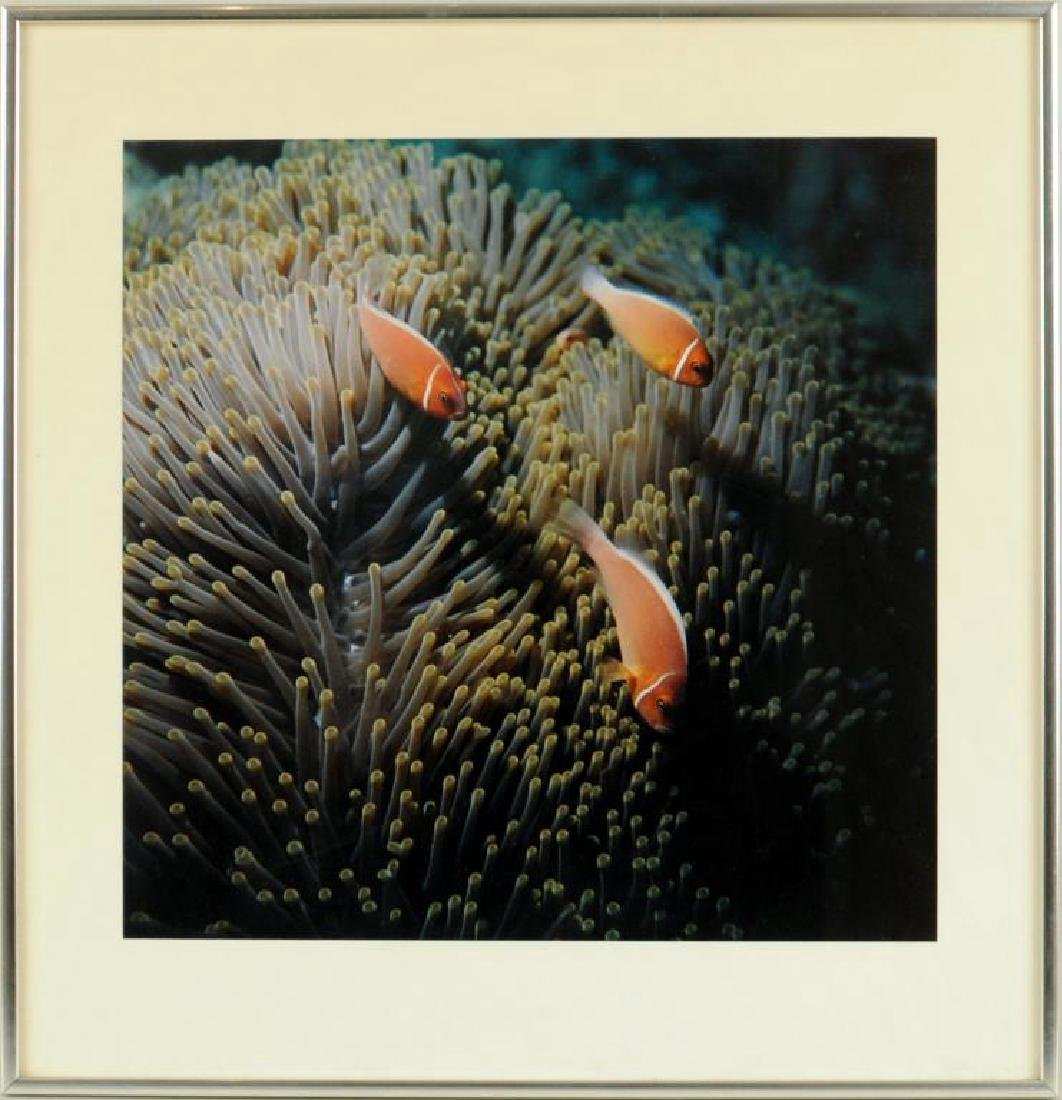 Framed Unsigned Color Photograph