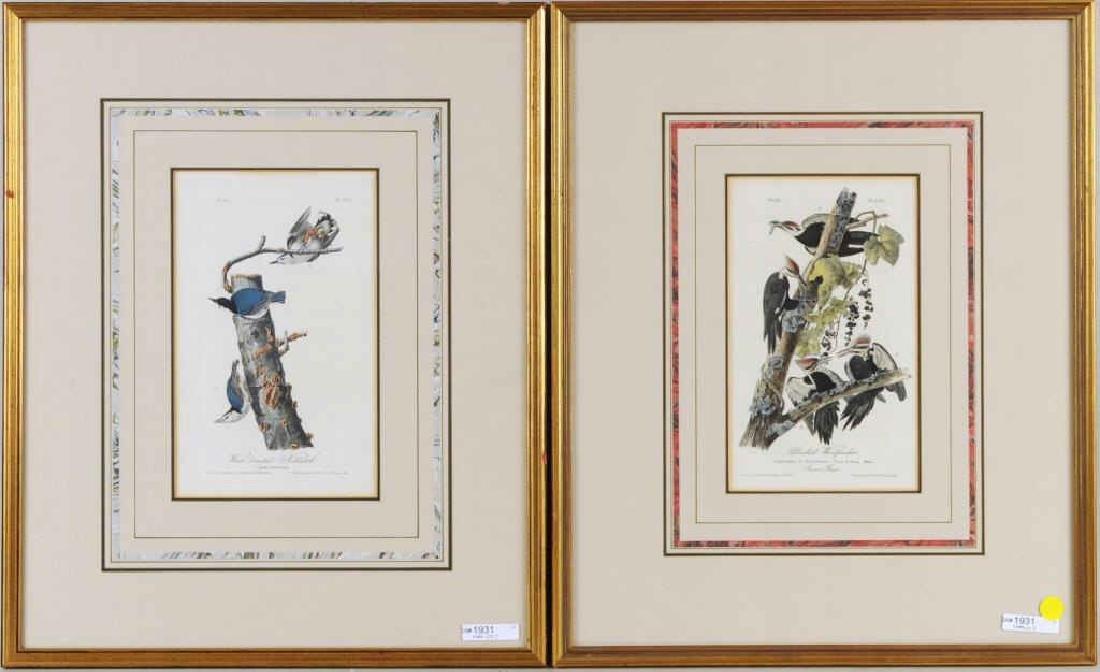 Two Audubon Octavo Bird Prints