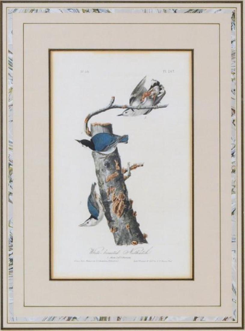 Two Audubon Octavo Bird Prints - 2