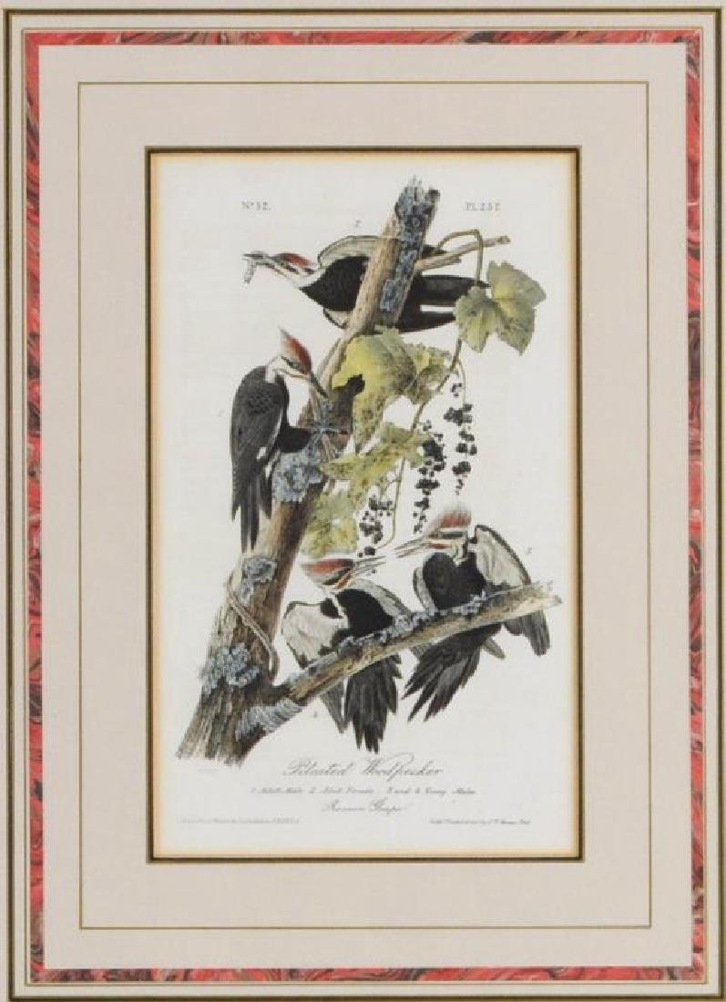Two Audubon Octavo Bird Prints - 3