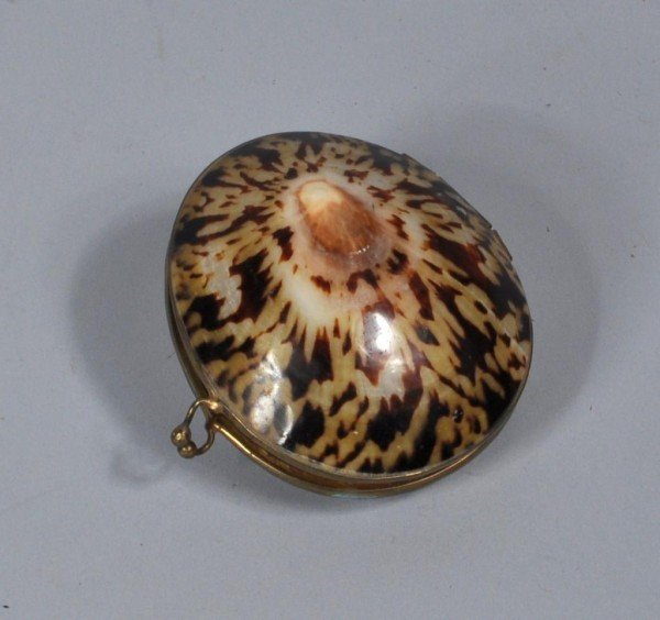 14: Hinged Shell Box/Change Purse