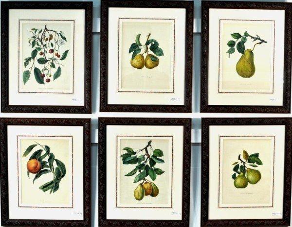 332 group of six framed botanical prints