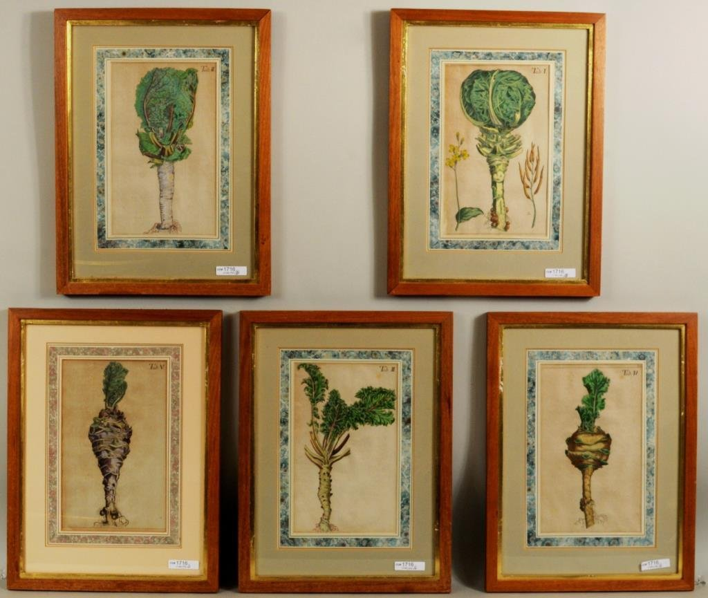 Five Early Framed Botanical Engravings